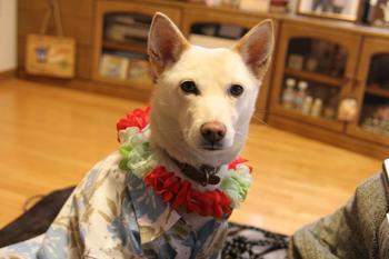 Aloha_dog1