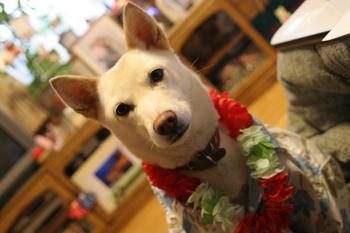 Aloha_dog2