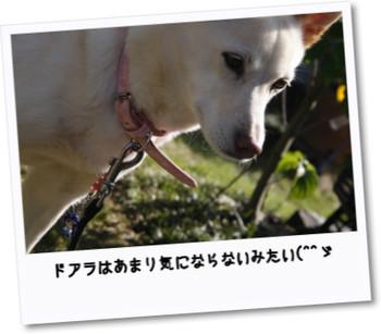 Photo14195009_mg_4753